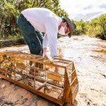 248 pássaros vítimas do tráfico retornam ao seu habitat natural